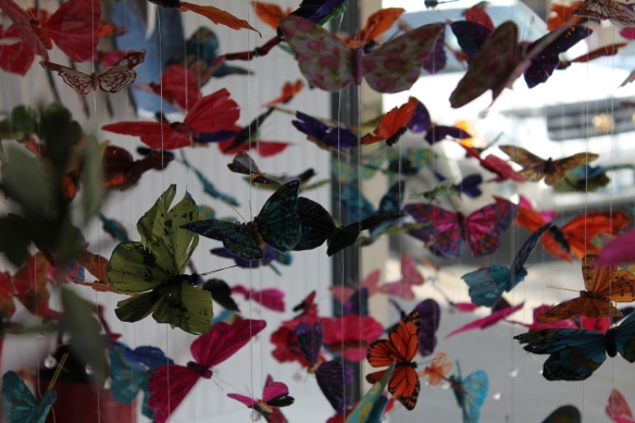 butterfly display in St Helena
